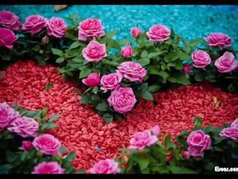 بالصور اجمل الورود في العالم , اروع الهدايا المقدمة لشخص ما 416 3