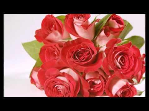بالصور صور ورد جميل , اروع الورود الروعة الجميلة 505 12