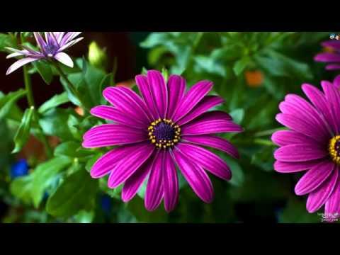 بالصور صور ورد جميل , اروع الورود الروعة الجميلة 505 2