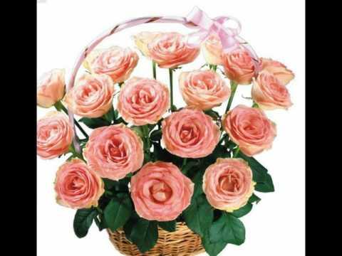بالصور صور ورد جميل , اروع الورود الروعة الجميلة 505 3
