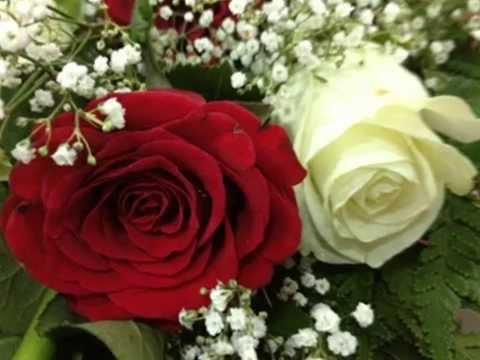بالصور صور ورد جميل , اروع الورود الروعة الجميلة 505 6