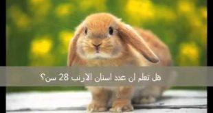 بالصور هل تعلم عن الحيوانات , كيفية التعلم عن الحيوانات 521 3 310x165