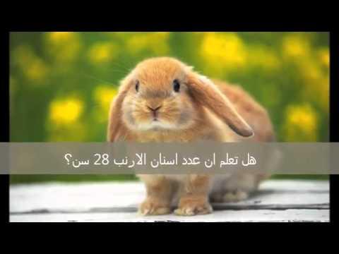 بالصور هل تعلم عن الحيوانات , كيفية التعلم عن الحيوانات 521