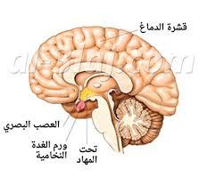 بالصور اعراض سرطان الدماغ , كيفيه تجنب الاصابه بورم فى الدماغ 6289