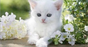 صور قطط كيوت , صور قطط حلوه