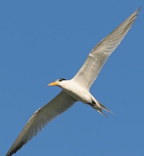 صورة اكبر طائر في العالم , طائر النعامه من اكبر الطيور فى العالم