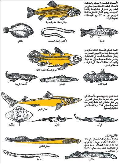 بالصور فوائد السمك , الفوائد الصحيه عند تناول الاسماك 2492 2