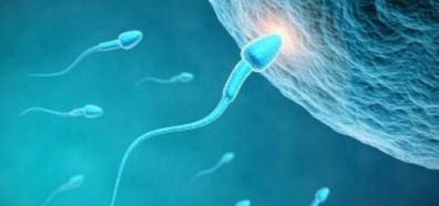 بالصور افضل وضعية للجماع لحدوث الحمل , وضعيات الجماع من اجل الحمل 12744 1