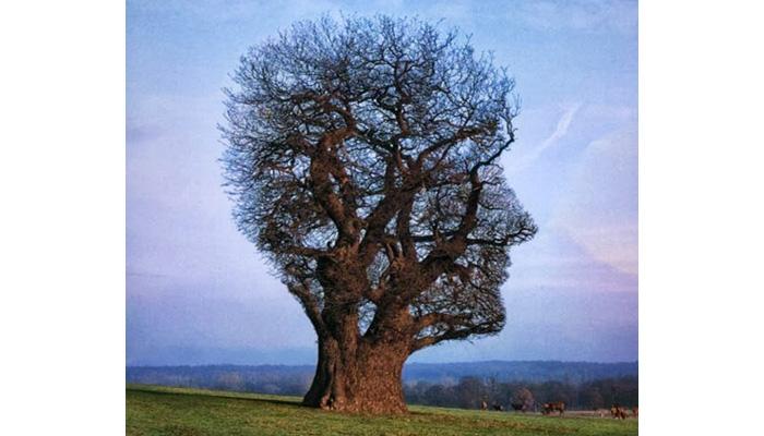 صور الطبيعة موضوع النشاط الانساني , موضوع عن الطبيعه الخلابه