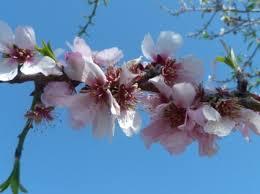 بالصور اجمل زهرة بالعالم , زهور رائعه جدا 12778 1