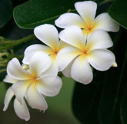 بالصور اجمل زهرة بالعالم , زهور رائعه جدا 12778 11