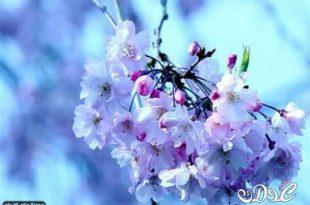 صور اجمل زهرة بالعالم , زهور رائعه جدا