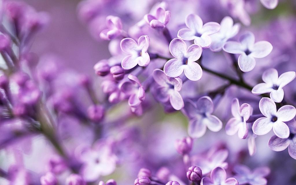 بالصور اجمل زهرة بالعالم , زهور رائعه جدا 12778 2