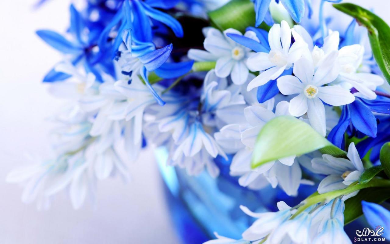 بالصور اجمل زهرة بالعالم , زهور رائعه جدا 12778 3