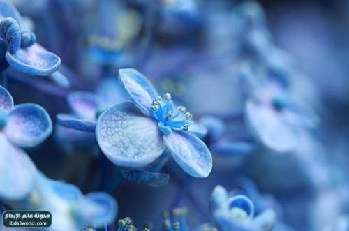 بالصور اجمل زهرة بالعالم , زهور رائعه جدا 12778 5