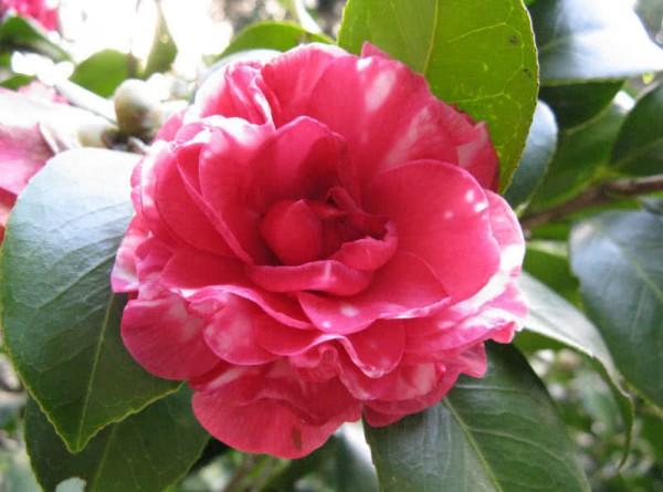 بالصور اجمل زهرة بالعالم , زهور رائعه جدا 12778 6