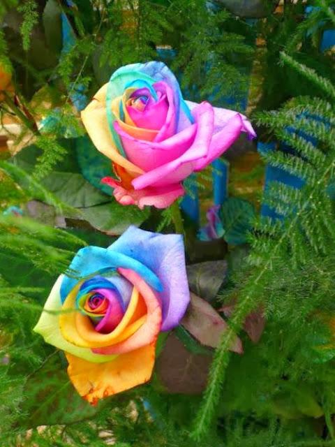 بالصور اجمل زهرة بالعالم , زهور رائعه جدا 12778 7