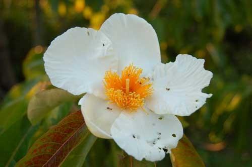 بالصور اجمل زهرة بالعالم , زهور رائعه جدا 12778 8