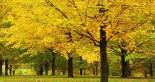 بالصور اجمل خلفيات طبيعيه , صور طبيعيه رائعه 12808 12 310x165