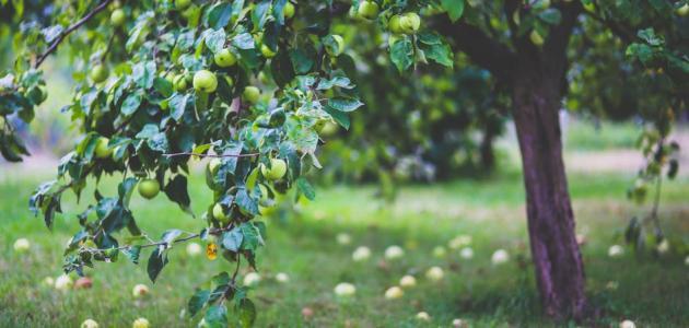 بالصور قصة ادم وحواء , ابو البشر ادم 68 1