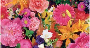 بالصور خلفيات ورود جميلة جدا , استمتع باروع الخلفيات الوردية 80 10 310x165