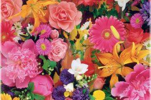 صور خلفيات ورود جميلة جدا , استمتع باروع الخلفيات الوردية