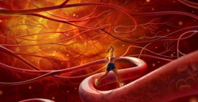 صور تنشيط الدورة الدموية , كيفية تنشيط الدورة الدموية