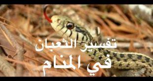 صور رؤية الثعبان في المنام وقتله , تفسير الثعبان فى المنام