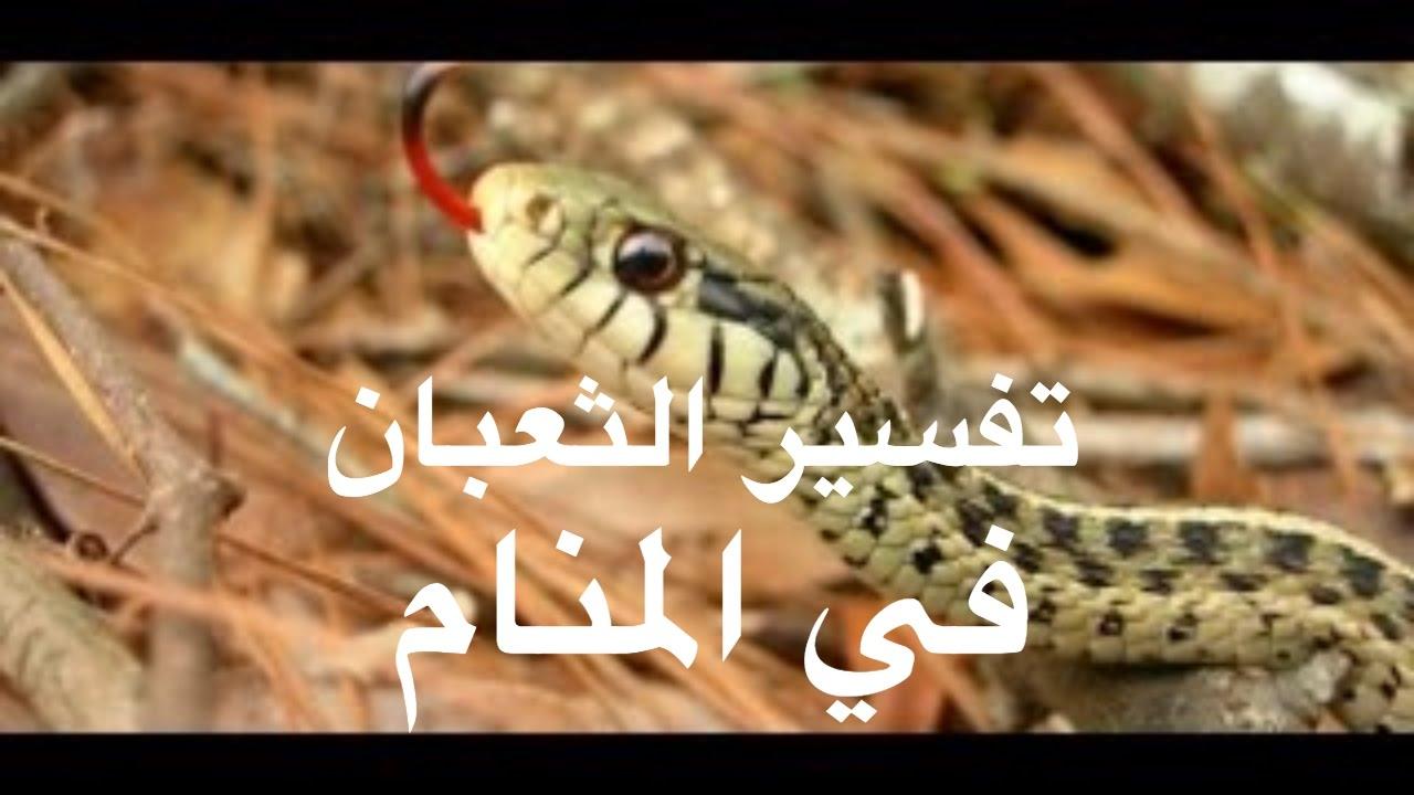 صورة رؤية الثعبان في المنام وقتله , تفسير الثعبان فى المنام
