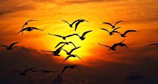 صورة صورة مغيب الشمس , اجمل منظر طبيعي لغروب الشمس بالصور