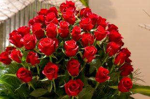 صورة صور ورود حلوه , اجمل الورود الطبيعية بالصور