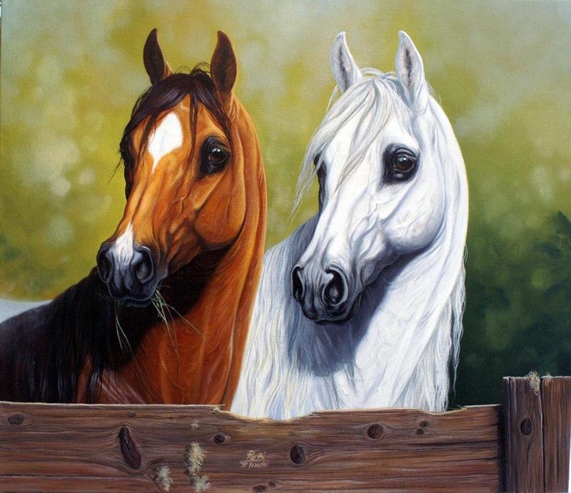 صورة صور خيل , اجمل صور الخيول الاصيلة