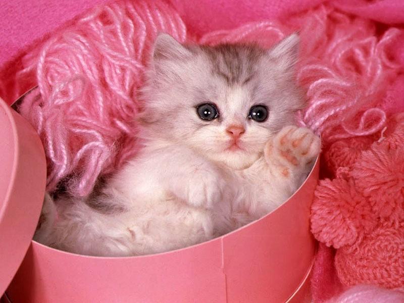 صور صور قطط صغيرة , صور اجمل قطة الكيوت