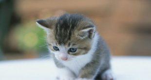 صورة صور قطط صغيرة , صور اجمل قطة الكيوت