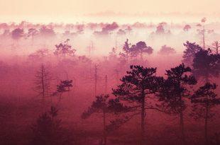 صورة صور خلفيات جوال , خلفيات متنوعه وجميلة للهاتف