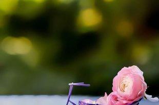صورة صور خلفيات ورد , اجمل خلفيات طبيعية للورود