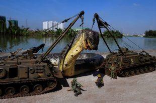 صور اكبر ثعبان في العالم , الثعبان الاكبر في العالم بالصور