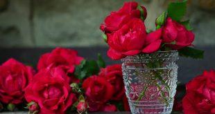 صور صور عن الورد , اجمل مناظر طبيعية فيها ورود بالصور