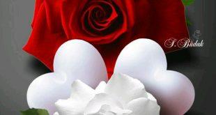 صور صور ورد رومانسي , اجمل صورة ورود حب وغرام