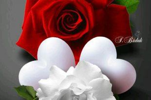 صورة صور ورد رومانسي , اجمل صورة ورود حب وغرام