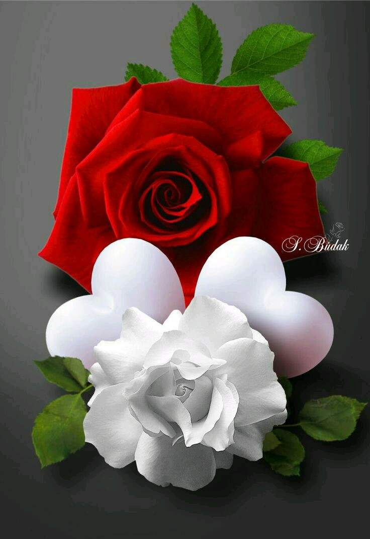 صور ورد رومانسي اجمل صورة ورود حب وغرام صور بنات