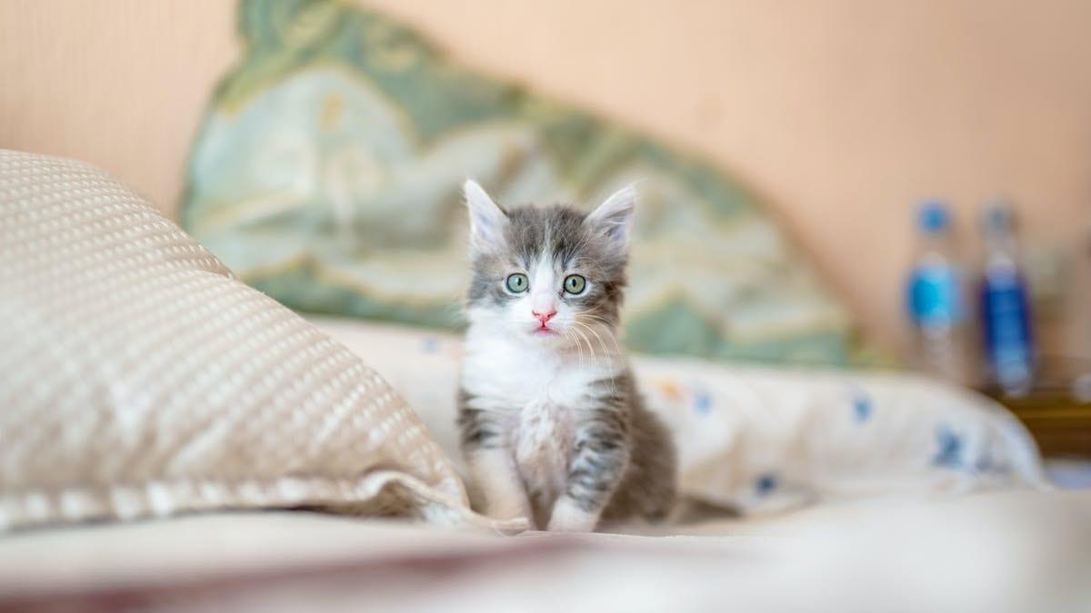صورة كيفية تربية القطط 4164 1