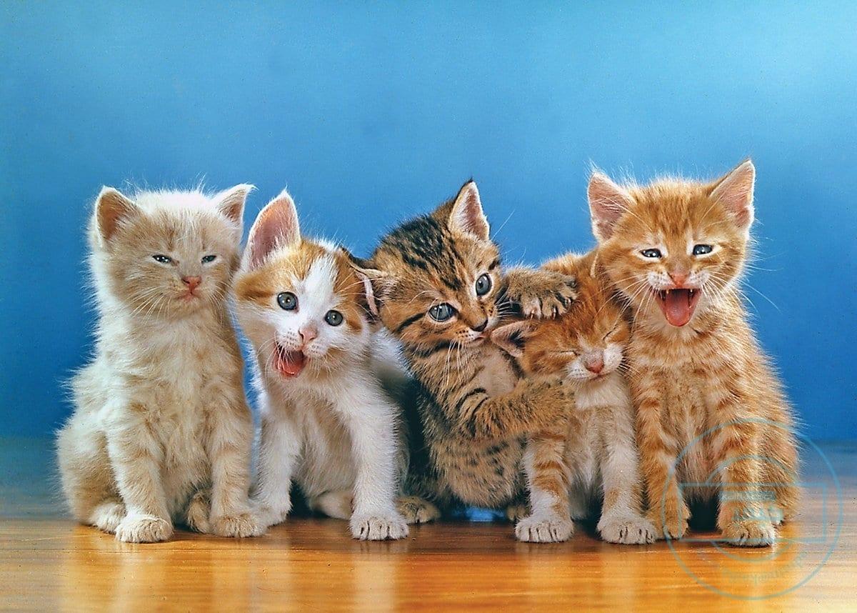صورة كيفية تربية القطط 4164