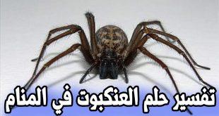 تفسير رؤية عنكبوت في المنام