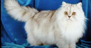 قطط رومي, حبيت القطط من جمالها