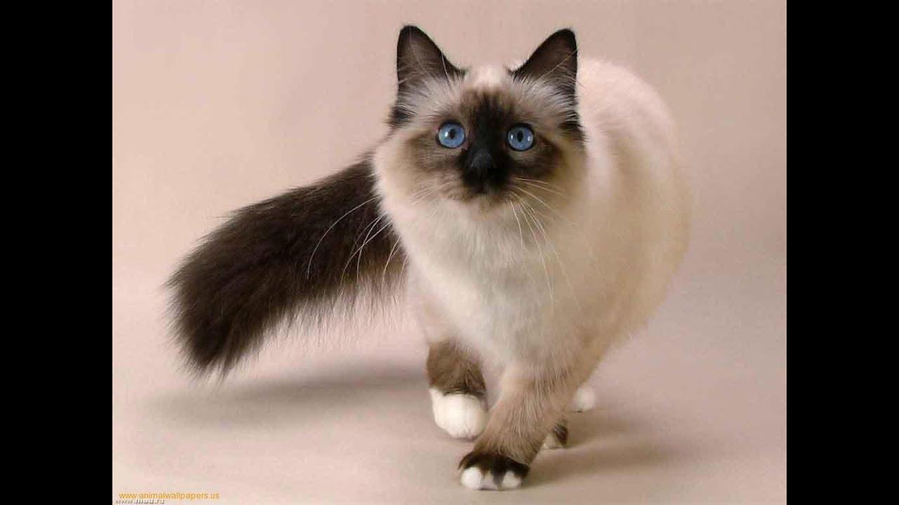 صورة قطط رومي, حبيت القطط من جمالها 2554 4
