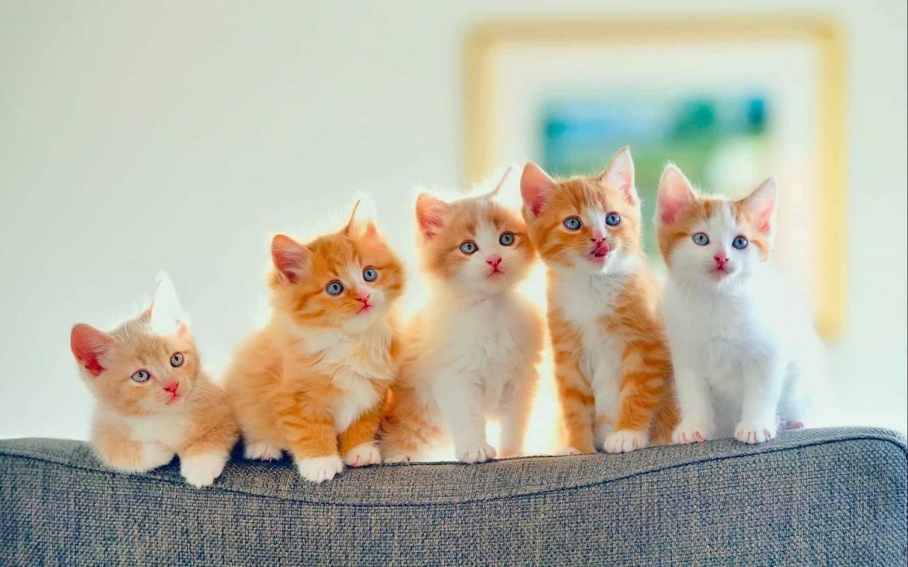 صورة قطط رومي, حبيت القطط من جمالها 2554 8