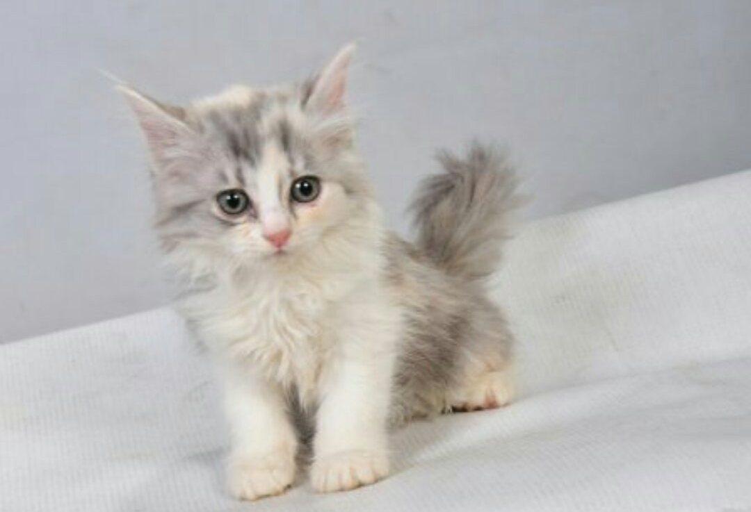 صورة قطط رومي, حبيت القطط من جمالها 2554