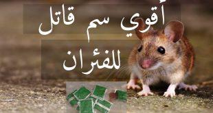 صورة كيف تقتل الفار في المنزل , أسرع وسيله لاصطياد الفئران بالمنزل 12180 2 310x165